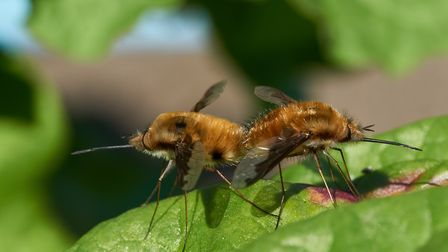 Bees and other insects are now thriving in the warmer weather. PHOTO: WWT