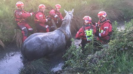 Exhausted horse freed from steep ditch in Soham after three-hour rescue
