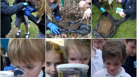 Insects bring science lessons to life at King's Ely Acremont.