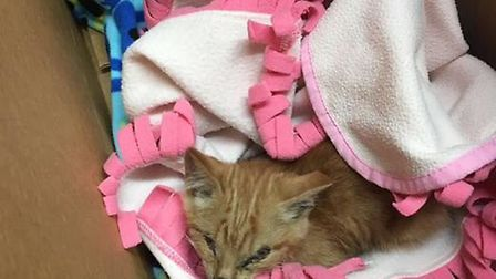 Is this your cat? Staff at Branching Out Charity Shop in Littleport try to reunite kitten with owner