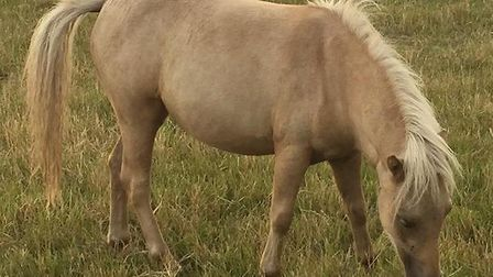 Eight horses were stolen from 16 Foot Bank in Stonea overnight on Wednesday July 12.