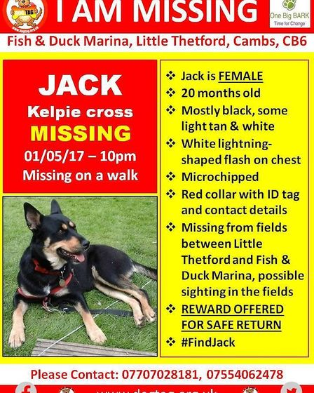 Reward offered for a missing dog who was lsot during a walk near Little Thetford