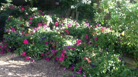 Dozens of hanging baskets before they were hung in Chatteris earlier this summer.
