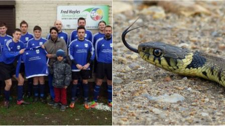 Sutton St James' latest King's Lynn & District Sunday League game was held up by a snake slithering