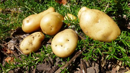 The Health and Safety Executive (HSE) has issued a reminder to potato farmers in Cambridgeshire of t