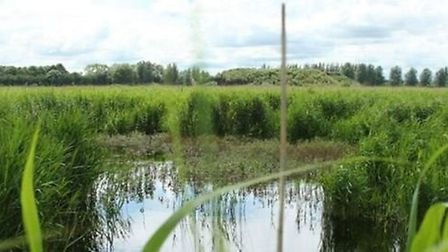 Over 20 years Andrew Green has transformed 250 acres at Kingfishers Bridge near Wicken from farmed f