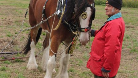 Magnificent heavy horses were a major attraction for thousands of visitors at Prickwillow Ploughing