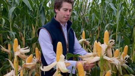 ProCam seeds and traits manager Will Miller at a trials site open day in Cambridgeshire. Picture: AB