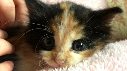 Ashley the kitten is at Block Fen RSPCA in Wimblington looking for a new home. She was found in a sk