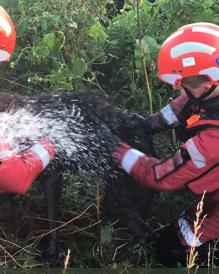 Fire crews rescued this alsatian stuck in mud at Coldham near March, Cambs. PHOTO: Cambs fire and re