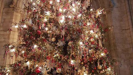 O Christmas Tree! O Christmas Tree! Thy leaves are so unchanging; Come to our special service when w