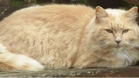 Missing cat Bikkit. March couple appeal for information to find him
