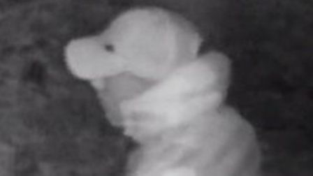 CCTV appeal after arson attack at Sion Park in Stansted Mountfitchet. Picture: ESSEX POLICE