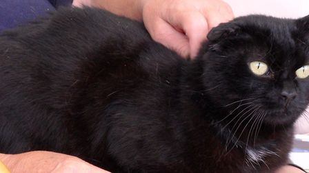 Barney is looking for a new home. he is currenlty living at the RSPCA Cambridshire mid east branch