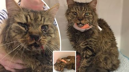 An Ely woman has launched a crowd fund after being left shocked to find her beloved pet covered in b