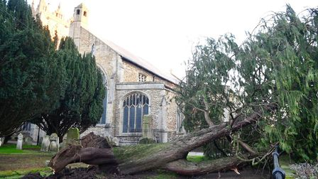 Storm wakes Fenland residents: Tree down in St Peter's Gardens, Wisbech. Photo: Ian Carter