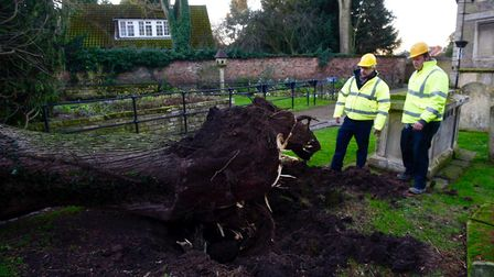 Storm wakes Fenland residents: Tree down in St Peter's Gardens, Wisbech. Bob Ollier, park manager wi