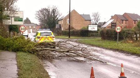 The fallen tree on Station Road, Fordham