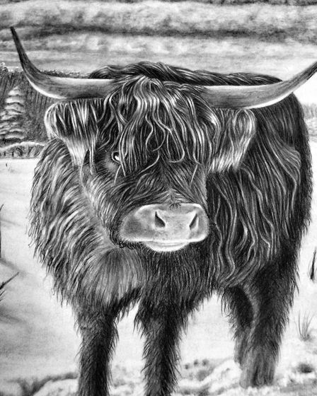 Ely artist Ian McKendrick's 'Highland Cow' drawing