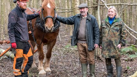 March: Suffolk Punch horse Easton Roy with Matt Waller of Hawthorn Heavy Horses and Councillors Simo
