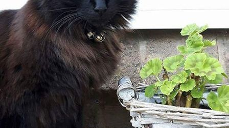 In 2016 a family was left devastated after their pet cat Barney was shot with a pellet gun.