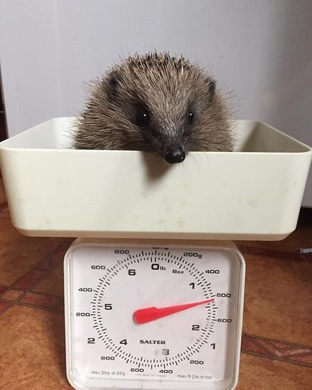 Monty on the scales