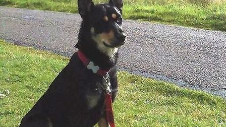 Jack went missing on a walk in Little Thetford ad her owners belive she is living wild in an area sp