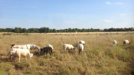 Ely residents are invited to Wilderland Farm in Haddenham for a one-day 'fun at the farm' event. Pho