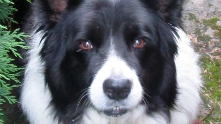 Eight-year-old collie, Ella, who lives in Littleport, would love someone to take her for walks.