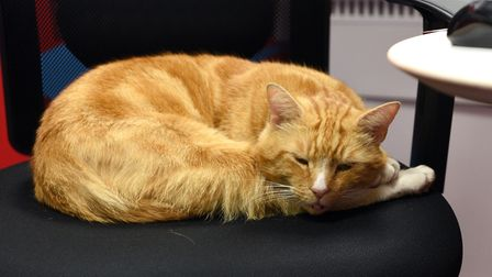 Garfield the Sainsbury's cat is guest of honour at a Cats Protection show