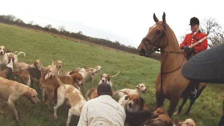 On New Year's Day, 2016, hunt saboteurs filmed the Fitzwilliam Hunt illegally chase and kill a fox.