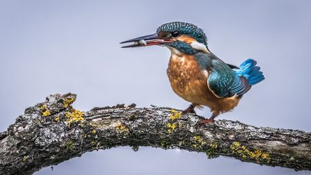 Dan Starling, 13, of Soham Village Collage has won first prize at a camera club competition with his