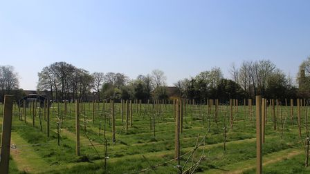 The newly-planted Amazing Apple Orchard in Wisbech Park. Photo: FDC