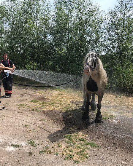 Fire crews tweeted about a horse getting stuck in the silt of a watery ditch in Dogsthorpe. PHOTO: C