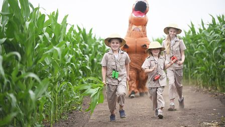 A giant Tyrannosaurus rex has been carved into the field of maize plants at the Skylark Garden Centr