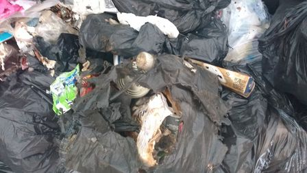 State-of-black-bags-after-rats