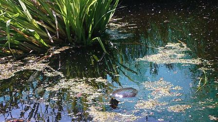 A woman from Doddington is on the hunt for her pet terrapin after she went missing around three mont