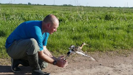 Rare birds beat the odds with a bumper year: Project Godwit is a partnership between RSPB and WWTBla