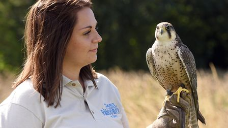 Children were able to take part in a range of bird handling sessions with dedicated instructors as w