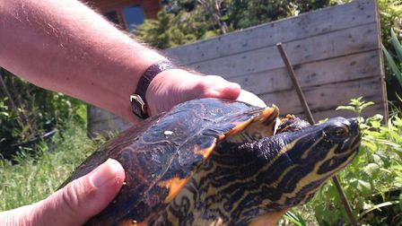 A woman from Doddington is on the hunt for her pet terrapin after she went missing around five month