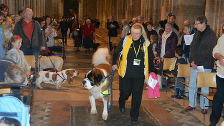 Pet service at Ely Cathedral attracted animals of all shapes and sizes from across the region. PHOTO