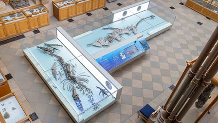Jurassic sea monster discovered at Must Farm near Whittlesey is unveiled to the public. Picture: FOR