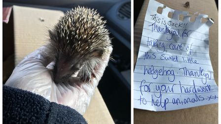 A hedgehog left at Fordham near Ely had a note attached to 'take care of this sweet little thing'. W