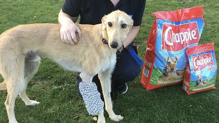 RSPCA receive a donation of food for the animals. Picture: RSPCA
