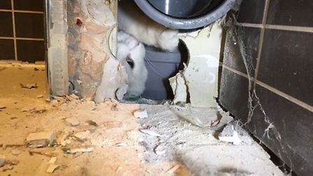 Cambridgeshire Fire and Rescue rescue a cat that got stuck behind a bathroom wall. Picture: CAMBRIDG