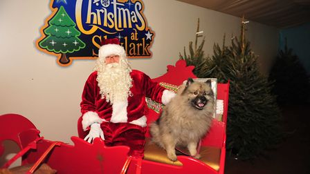 All animals welcome to meet Santa Paws this Christmas at Skylark Garden Centre. Picture: HARRY RUTTE