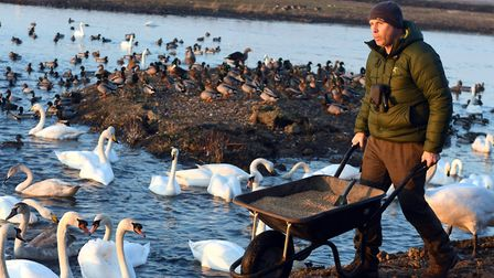 Festival of swans at WWT Welney Wetland Centre. Mike Dilger from BBC One Show and Springwatch. Pictu