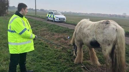 Horse rescued from road in Whittlesey. Picture: POLICING FENLAND.