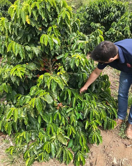 But first…Coffee! Visit to Costa Rica for Ely's micro-roastery Silver Oak Coffee to see where their