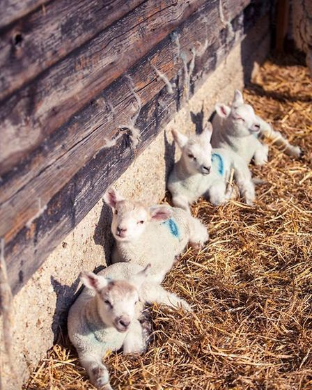 Toby Dean has enjoyed modest success but continued growth after launching his Cambridge Lamb Company